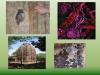 biotecnologie-beni-culturali